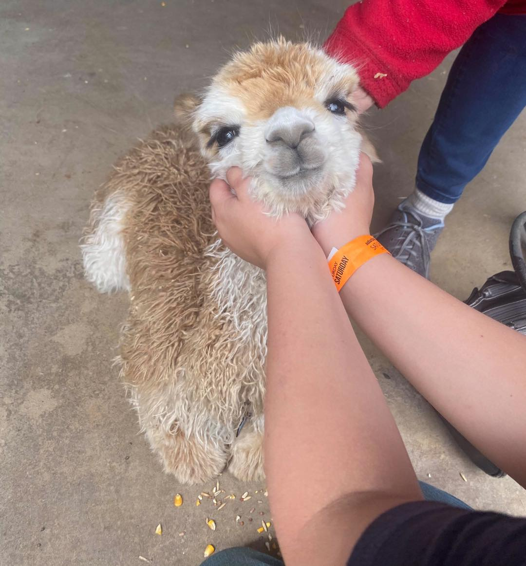 things to do in broken bow- petting zoo